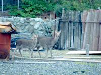 日島鹿パーク(車で60分)